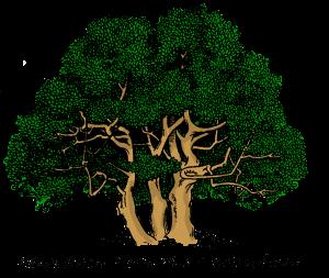 three-trunked-tree